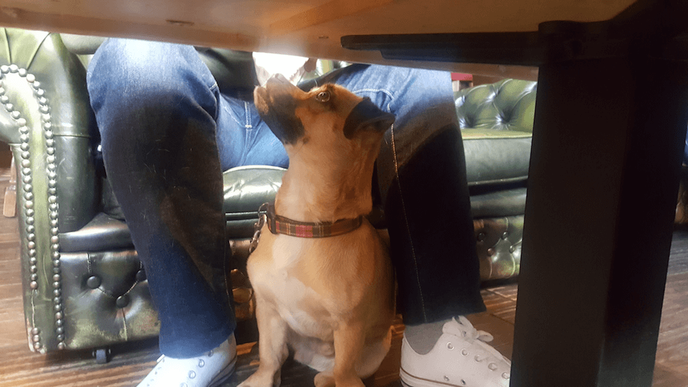 dog friendly pubs in glasgow
